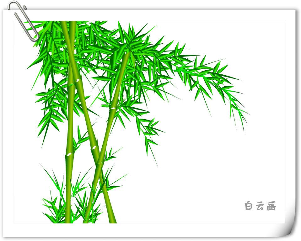 分享到: 竹子喜温暖的气候,北方的寒冷干燥使竹子成活率低,生长不良.